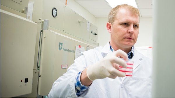WVU researchers study how brain cells stress each other out for their own good
