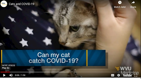 WVU Health Report: Cats and COVID-19