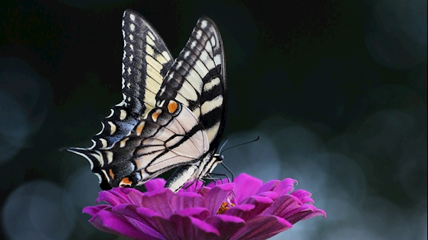 WVU Medicine Home Health and Hospice holds butterfly release memorial