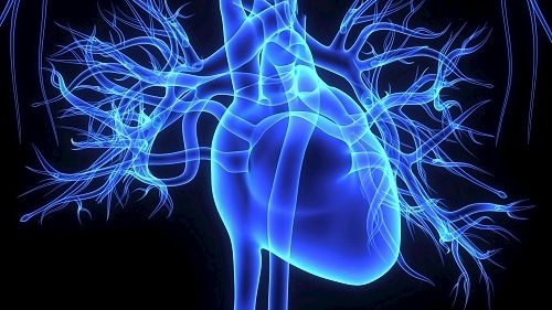 WVU Heart and Vascular Institute physicians first in state to introduce new therapy for leaking heart valve