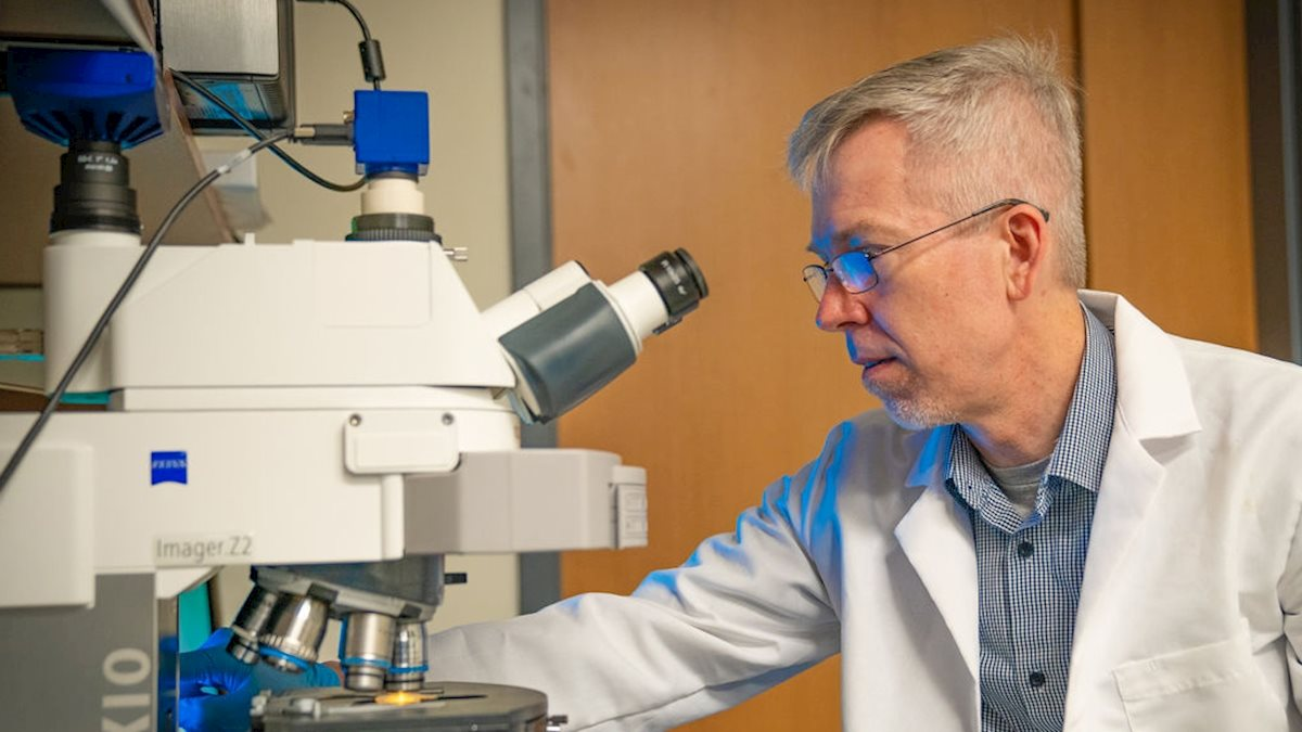Enter the exosome: WVU researcher studies how cancer and immune cells communicate