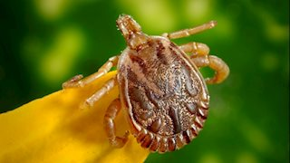 WVU Medicine expert: Lyme disease is on the rise in West Virginia but can be prevented