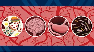 WVU researchers explore stroke's effects on microbiome